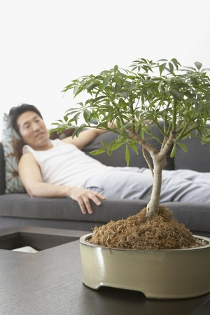 exerting: Asian man looking at bonsai tree