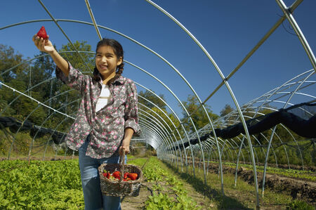 Hispanic girl holding basket of organic strawberries 스톡 콘텐츠