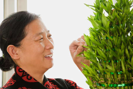 tending: Chinese woman tending plant LANG_EVOIMAGES