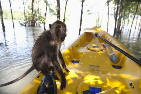 Monkey sitting on kayak in water