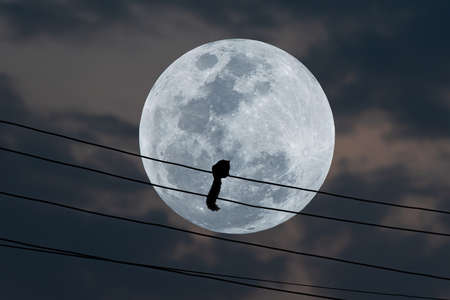 Full moon in the sky with silhouette squirrel on electric wire.
