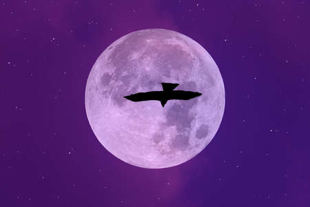 Full moon with silhouette bird on the sky.