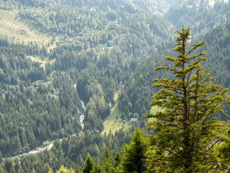 From a high mountain you can see a forest river, small houses in the forest. Big spruce stands in the foreground. Beautiful forest landscape in the mountains. Alps