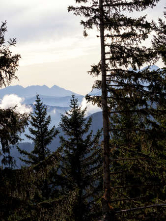 Tall spruce trees grow on a hillside. The mountain ranges of the Alps are visible in the distance due to the treetops. The mountains are shrouded in haze.