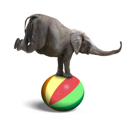 concepto equilibrio: Elefante que balancea en una bola de colorido, aislado en fondo blanco Foto de archivo