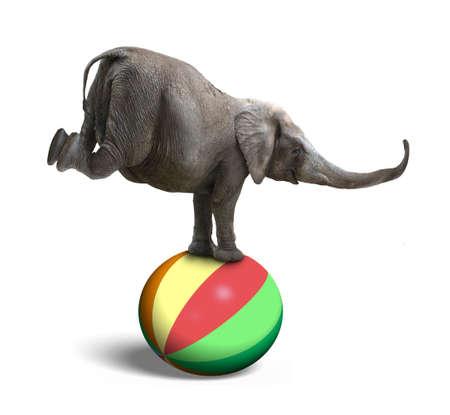 Elephant balanceren op een kleurrijke bal, geïsoleerd op een witte achtergrond Stockfoto