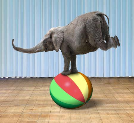Elephant balanceren op een kleurrijke bal, met een overdekt podium achtergrond