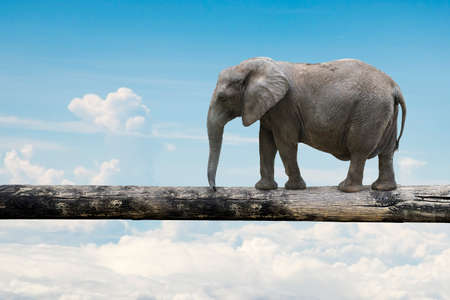 Elephant balancing on tree trunk, with nature sky background. Banque d'images