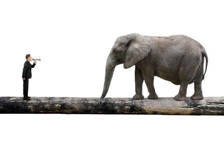 Businessman using speaker yelling at elephant on single wooden bridge, with white background, communication concept.