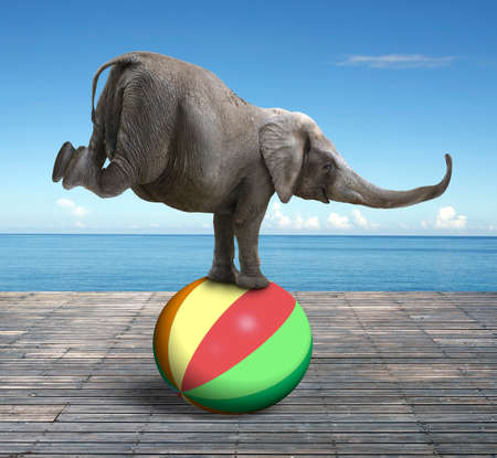 balancing act: Elephant balancing on a colorful ball, with nature sea wood floor background.