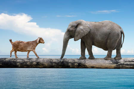 rivalry: Elephant and sheep walking over the single wooden bridge, on blue sky sea background, rivalry concept. Stock Photo
