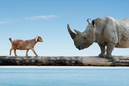Rhinoceros and sheep walking over the single wooden bridge, on blue sky sea background, rivalry concept.