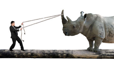 animal fight: Businessman pulling rope against a huge rhinoceros balancing on tree trunk, isolated on white background.