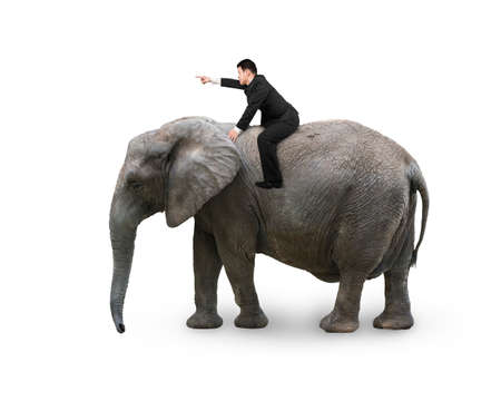 Man with pointing finger gesture riding on walking elephant, isolated on white. Archivio Fotografico