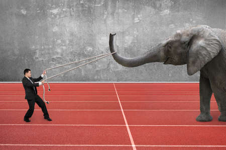 running nose: Businessman using rope pulling the nose of elephant, with red running track background.