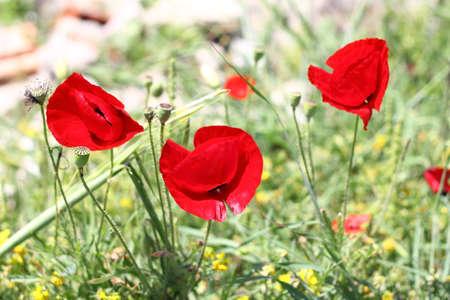 Beautiful flowers blooming in the garden