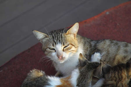 Mother cat with a small kitten lying on the floor. Cat family