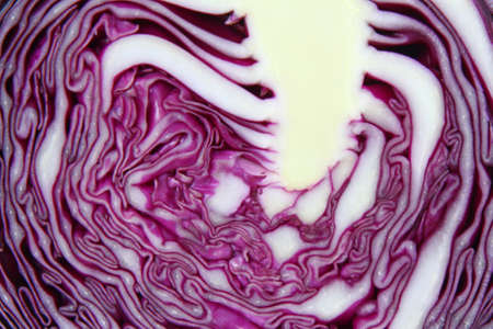 Close-up of a cut red cabbage Foto de archivo