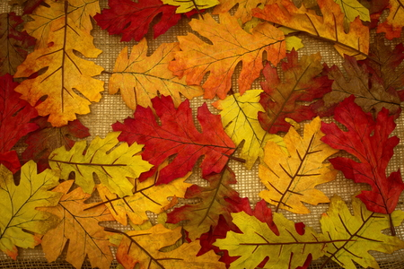 autumn, fall, background of fall leaves