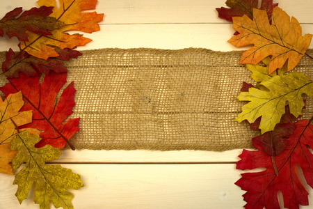 autumn, fall, background on white pine with leaf border Imagens