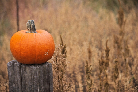 pumpkin on a wood post out in a field
