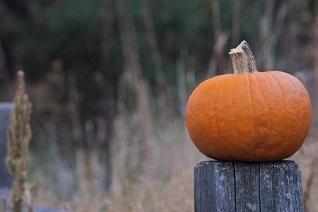 single pumpkin on a post in a field Imagens