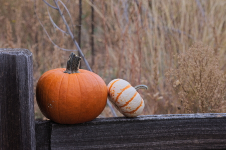 two pumpkins on a split rail fence out in a field Imagens