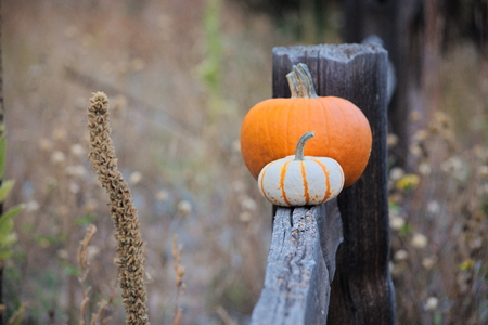 two pumpkins on a wood fence Imagens