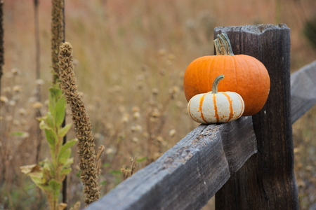 two pumpkins in a field on a fence