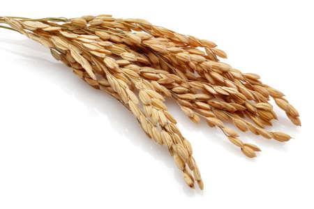 Rice stelen. Geïsoleerd op een witte achtergrond Stockfoto