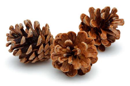 enebro: Conos de pino aislados sobre fondo blanco.