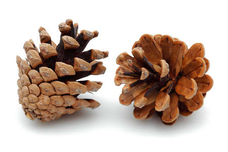 Pine cones isolated on white background.