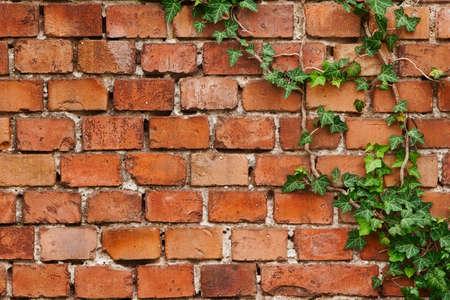 Old brick wall texture with creep