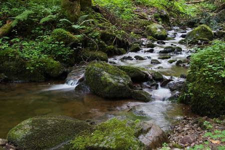 Detail of stream in the forest