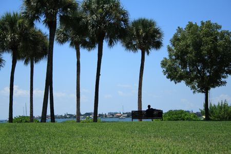Man relaxing on a bench by the water.  Sailboats and palm trees fill the scene on this beautiful day in south Florida.
