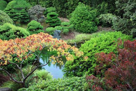 Beautiful pond with bright foilage surrounding.  Located at the Japanese Tea Gardens in San Francisco, California. Stock Photo