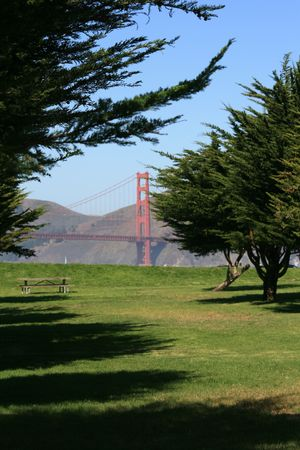 Peek at the Golden Gate bridge throught the fir trees at Crissy Field.  Located in beautiful San Francisco, California. Stock Photo - 5853292