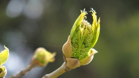 Interesting view of a spring bud Stock Photo
