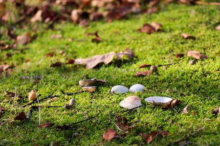 Shells and Leaves on Moss