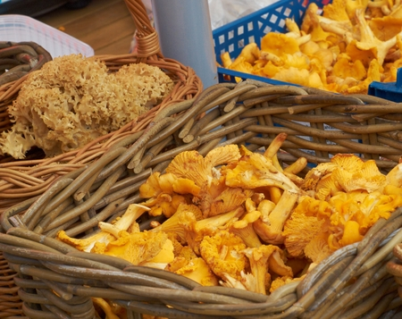 puckered: Fresh chanterelles and Cauliflower mushroom exposed in baskets on the market