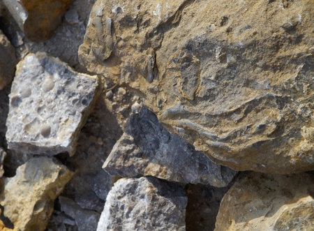 fossils: Fragments of fossils from Muslovka quarry