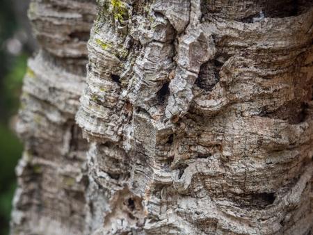Close up of bark of a cork oak tree,