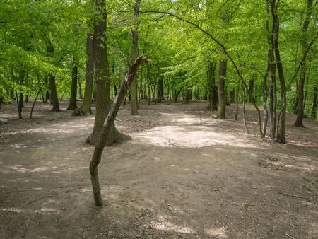 Devastation of Prokopske valley suburban forest on the outskirts of Prague due to drought together with high attendance in connection with the COVID-19 pandemic Stock Photo