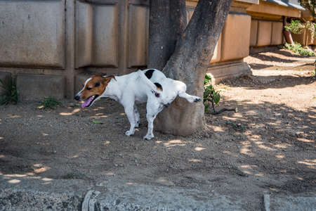Dog pisses on tree in summer Stock Photo