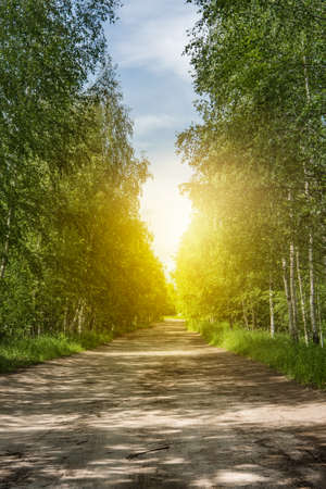 The sunny road passing through the forest Stock Photo