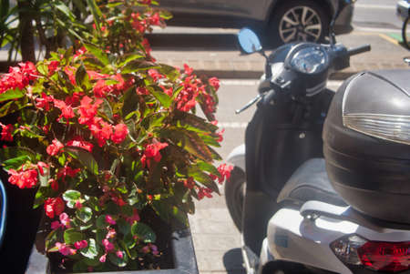 Bush on a flower bed with red flowers in the park. Vintage scooter