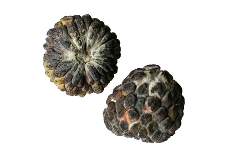 custard apple: custard apple is rotten Stock Photo