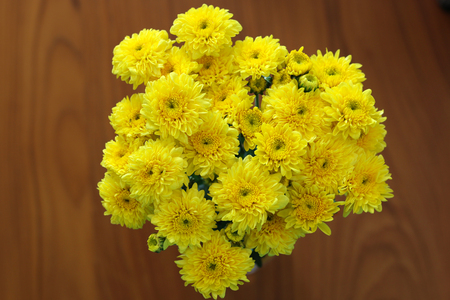 Beautiful Yellow Flower  ,dasiy