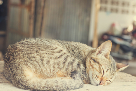 A little cat sleeping on table that is relaxed in font of house, soft focus
