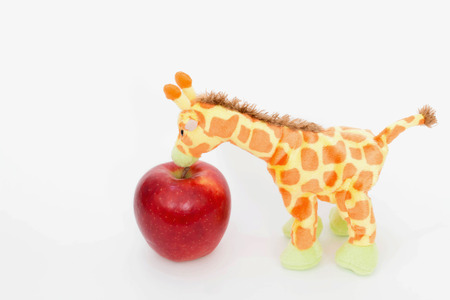 Cute giraffe with red apple fruit .He is strong ,Health care and diet concept